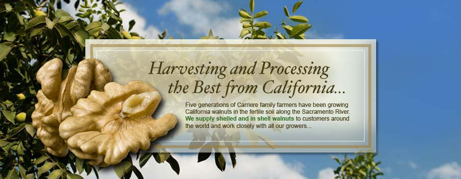 California Walnuts and Walnut Processing | Call 530-934-8200
